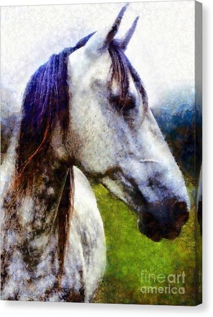 Horse I Dream Of You Canvas Print
