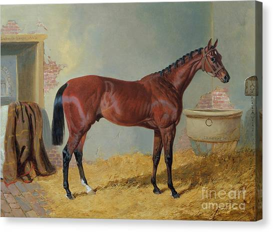 Horseracing Canvas Print - Horse In A Stable by John Frederick Herring Snr