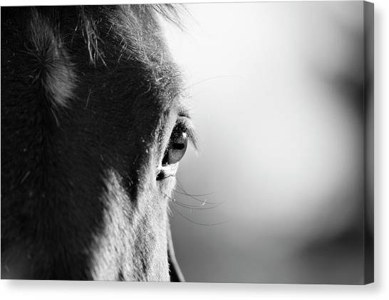 Horses Canvas Print - Horse In Black And White by Malcolm MacGregor