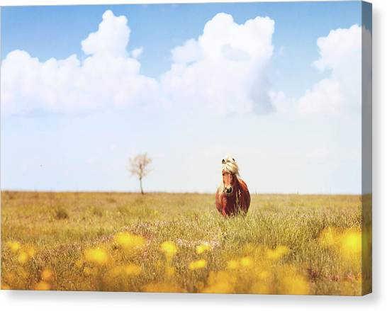 Horse Farms Canvas Print - Horse In Field by Elena Kovalenko