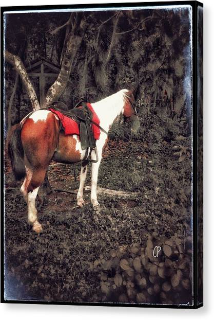 Horse In Red Canvas Print