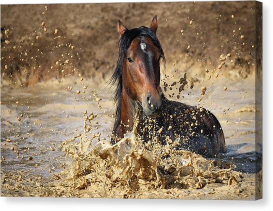 Mud Canvas Print - Horse In Water by Vedran Vidak