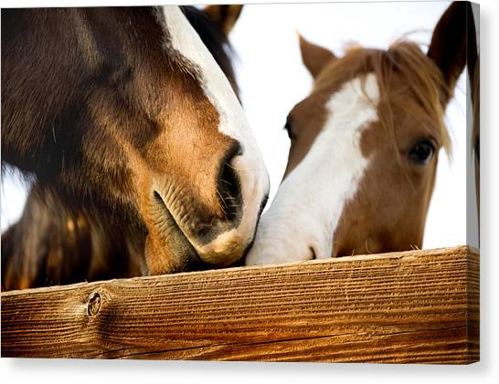 Horse Kisses Canvas Print by Michelle Shockley