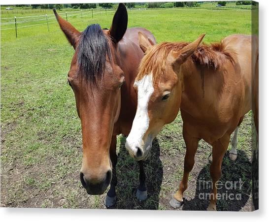 Horse Love Canvas Print