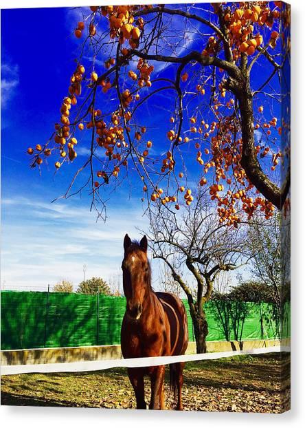 Horse Canvas Print by Niki Mastromonaco