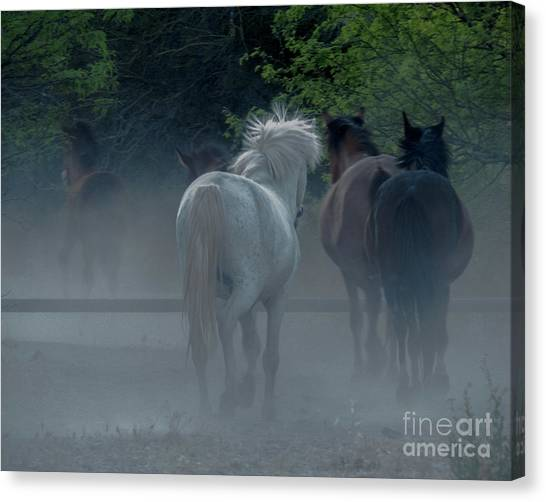 Horse 8 Canvas Print
