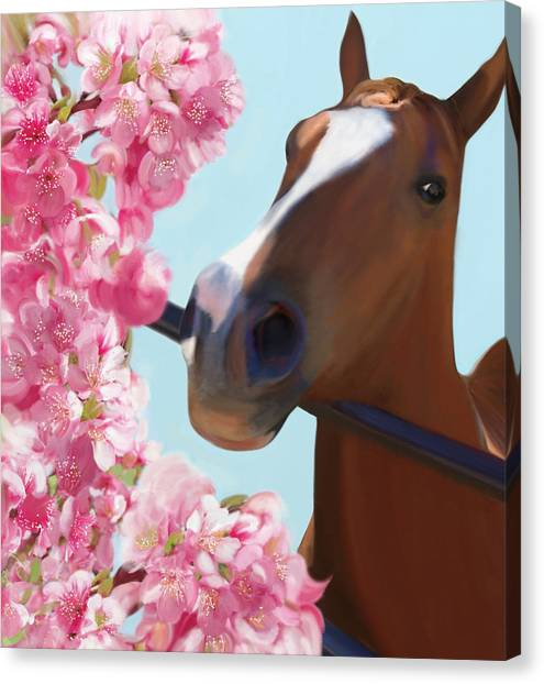 Horse Pink Blossoms Canvas Print
