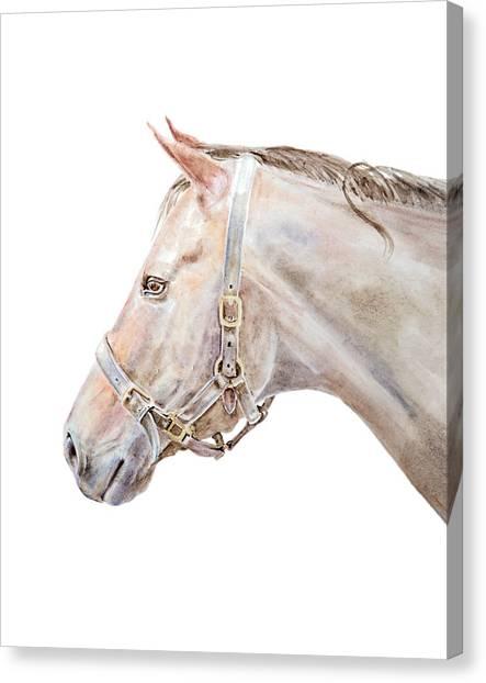 Horse Portrait I Canvas Print