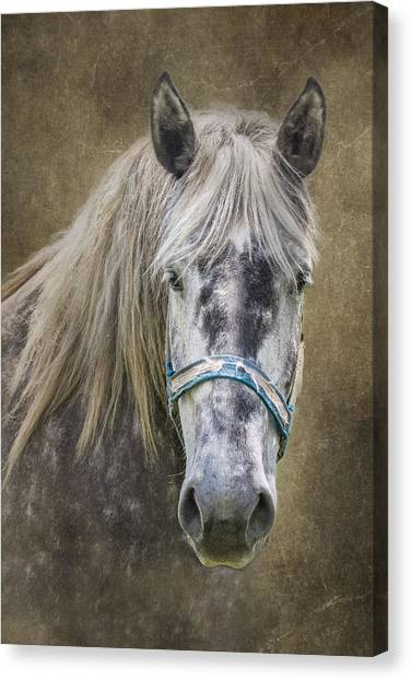 Equine Canvas Print - Horse Portrait I by Tom Mc Nemar