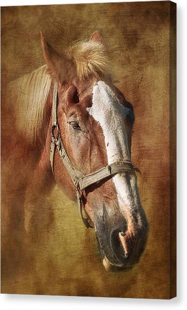 Bridle Canvas Print - Horse Portrait II by Tom Mc Nemar