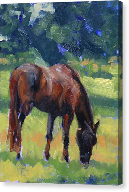 Horse Study No.40 Canvas Print by Tracy Wall