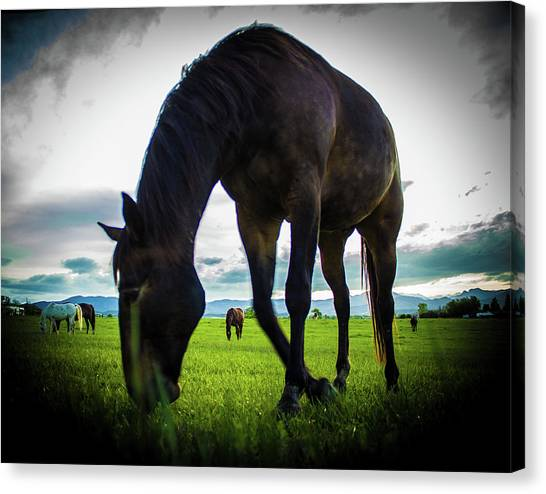 Horse Time Canvas Print