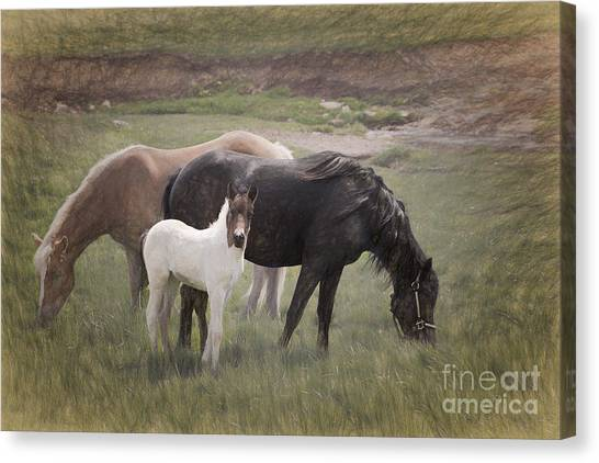 Horses And Colt  Canvas Print