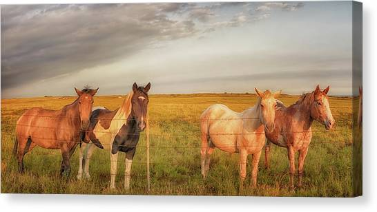 Horses At Kalae Canvas Print