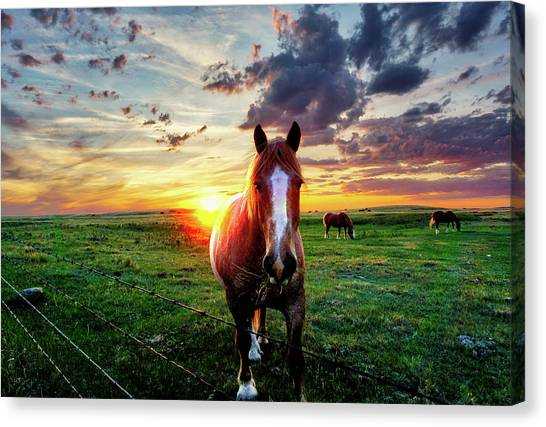 Horses At Sunset Canvas Print