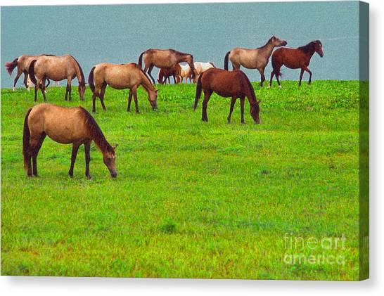 Puerto Rico Canvas Print - Horses Graze By Seaside by Thomas R Fletcher