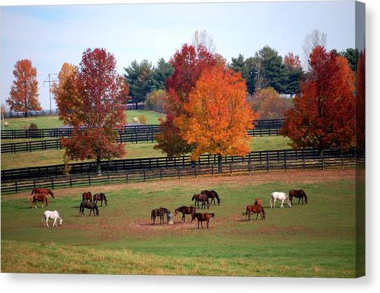 Horses Grazing In The Fall Canvas Print
