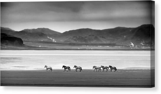 Horses, Iceland Canvas Print