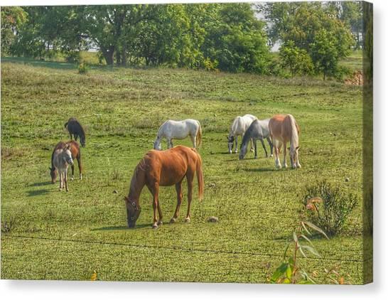 1003 - Horses In A Pasture I Canvas Print