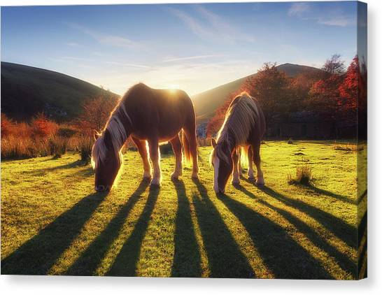 Horses In Austigarmin Canvas Print