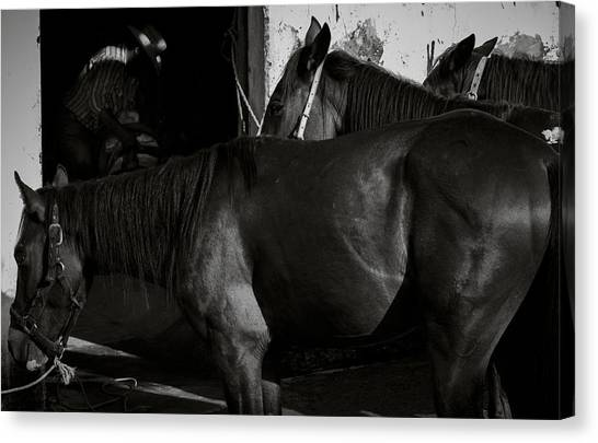 Horses In Mexico Canvas Print by Dane Strom