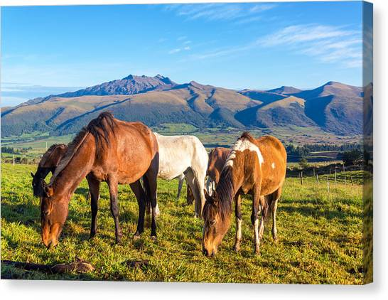 Cotopaxi Canvas Print - Horses In Rural Ecuador by Jess Kraft