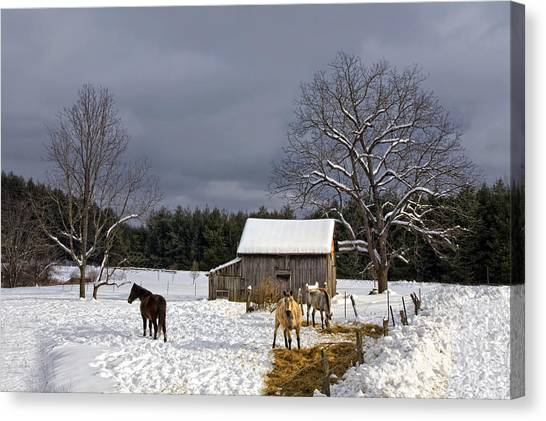 Horses In Snow Canvas Print