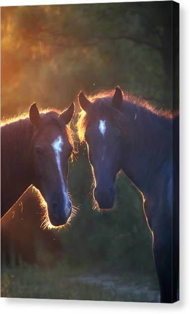 Horses In The Early Morning Canvas Print