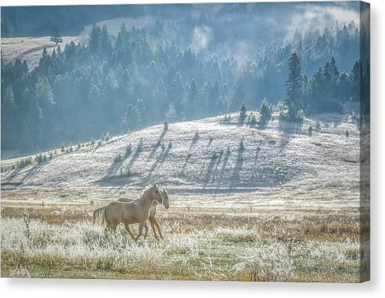 Horses In The Frost Canvas Print