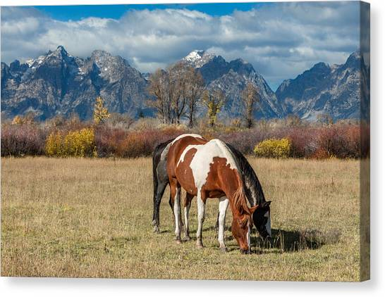 Black Stallion Canvas Print - Horses In The Grand Tetons by Kathleen Bishop