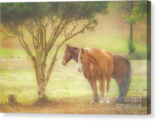 Horses In The Meadow Canvas Print