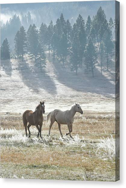 Horses In The Morning Light Canvas Print