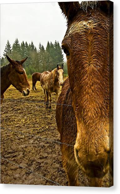 Horses In The Rain Canvas Print by Dale Stillman