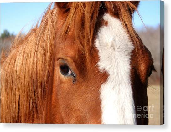 Horse's Mane Canvas Print