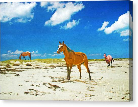 Wild Horse Canvas Print - Horses Of Cumberland by Laura D Young