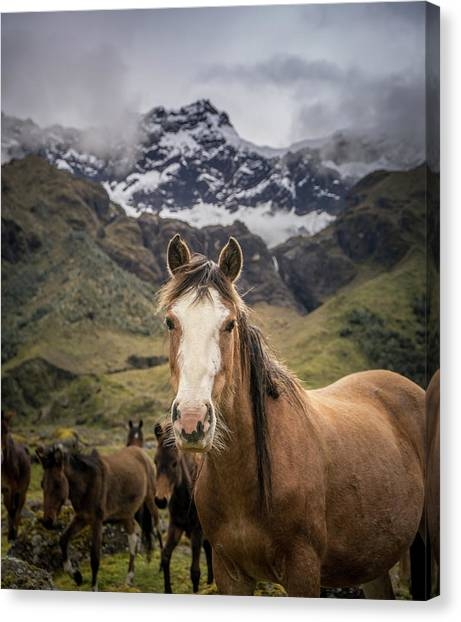 Ecuadorian Canvas Print - Horses Of Ecuador by Daniel Cooley