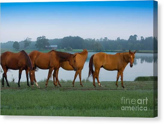 Horses On The Walk Canvas Print