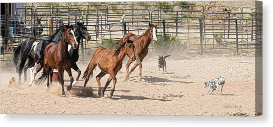 Horses Unlimited #3a Canvas Print