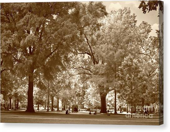 University Of South Carolina Canvas Print - Horseshoe Sepia by Skip Willits