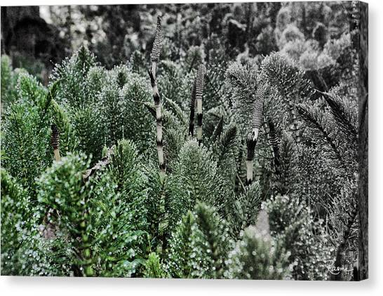Horsetail Dewpoint Canvas Print