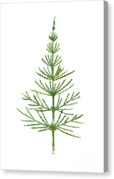 Birthday Canvas Print - Horsetail Watercolor Green Poster by Joanna Szmerdt