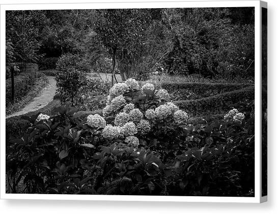 Hortencias-bosque Do Silencio-campos Do Jordao-sp Canvas Print