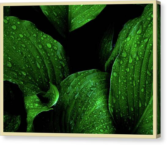 Hostas After The Rain I Canvas Print