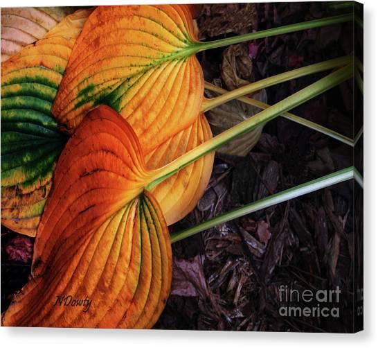 Hostas In Autumn Canvas Print