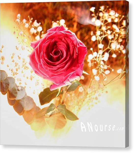 Roses Canvas Print - Hot Beauty  #fire #nophotoshop by Andrew Nourse