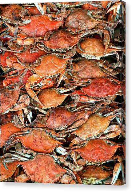 In A Row Canvas Print - Hot Crabs by Sky Noir Photography by Bill Dickinson