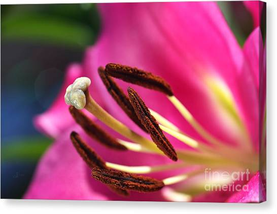 Hot Is Lily Canvas Print