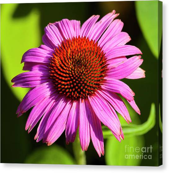 Hot Pink Flower Canvas Print