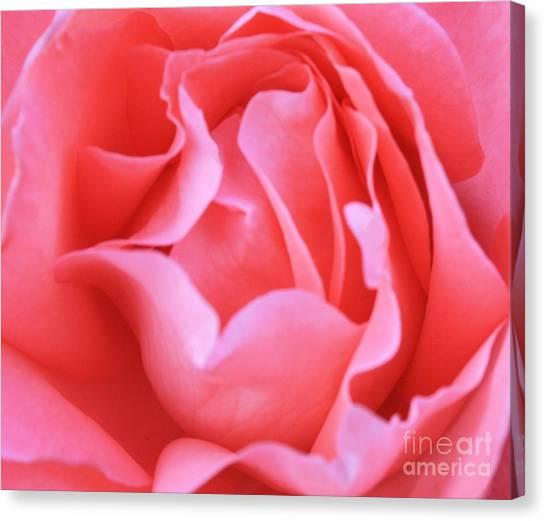 Hot Pink Petals Canvas Print