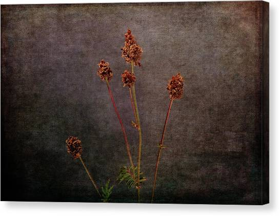 Canvas Print featuring the photograph Hot Summer Victims by Randi Grace Nilsberg